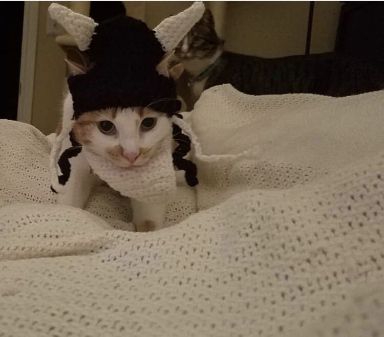 Viking Cats with Viking Hats